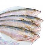 长江刀鱼禁捕两个月后,竟有饭店公然出售相关菜品