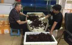 小龙虾价格开始回升,今年销量不及去年的一半【最正宗的重庆火锅底料】